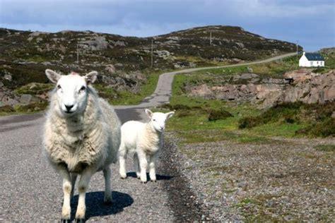 Typisch Für Schottland by Rundfahrt Wolle Und Whisky In Den Schottischen Highlands