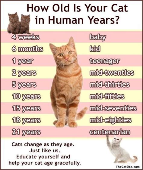 cat years chart eat work and blog kitten 101 feeding is believing