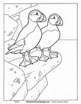 Puffin Pages Coloring Birds Iceland Colouring Animal Printable Puffins Bird Educational Preschool Worksheets Books Fun Sheets Easy Drawings Animals Glass sketch template