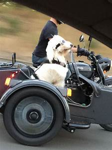 Just a dog in a sidecar wearing goggles...nothing to see ...