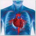Шумы в сердце гипертония