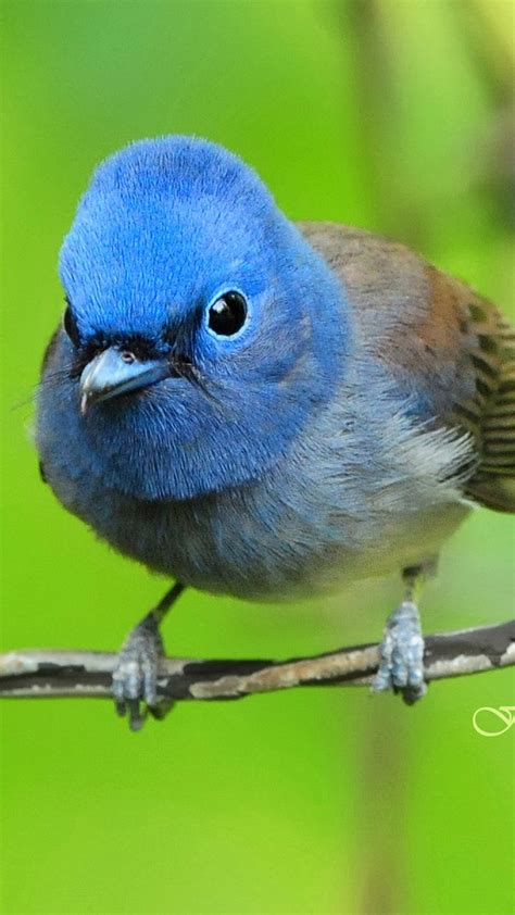 Blue exotic bird - Best htc one wallpapers, free and easy ...
