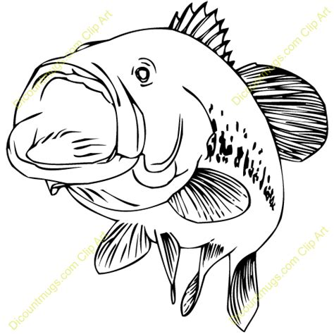 Bass Clipart Bass Fish Images Clip Www Pixshark Images