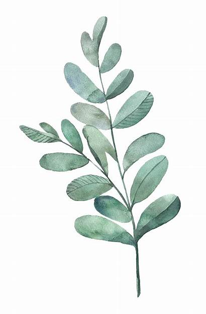 Watercolor Leaves Transparent Leaf Clipart Painting Plant