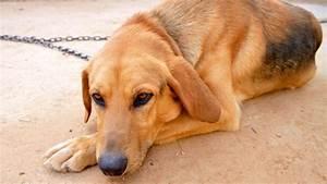 Les chiens peuvent-ils avoir la maladie de Parkinson?