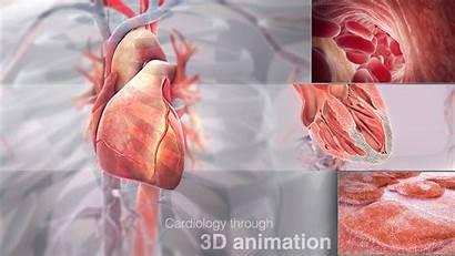 Heart Cardiology 3d Medical Illustration Scientific