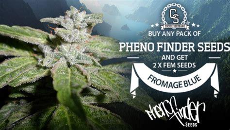 choice seedbank buy cannabis seeds