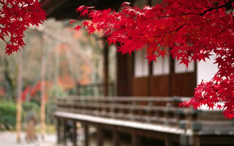 nature japan wallpapers hd desktop  mobile backgrounds