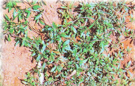 โครงการอนุุรักษ์พันธุกรรมพืชอันเนื่องมาจากพระราชดำริฯ ...
