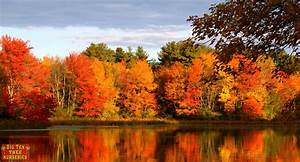 Best, Fall, Color, Trees, For, Texas