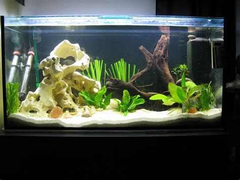 kosten aquarium einrichten so sparen sie am aquarium tipps vom aquaristik