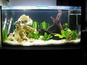 Aquarium Einrichten 60l : so sparen sie am aquarium tipps vom aquaristik blog ~ Michelbontemps.com Haus und Dekorationen
