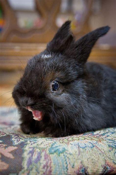 super excited ermahgerd animals python  bunny