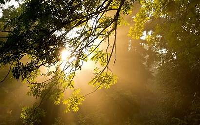 Morning Sunshine Wallpapers Nice Pc Desktop Nature