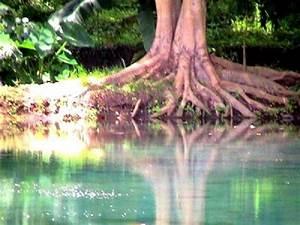 Baum Am Wasser : active aid in africa wie b ume helfen ~ A.2002-acura-tl-radio.info Haus und Dekorationen