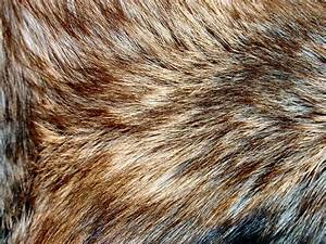 101 best images about Animal Textures on Pinterest
