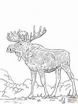 Elk Coloring Printable Alce Disegni Head Colorare Colorear Disegno Eurasia Clip Dibujos Lazy Template Completare Dibujo Stampare Bull Popular Being sketch template