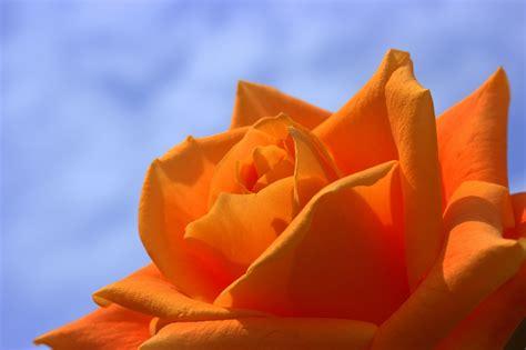 1000+ Orange Blumen Fotos · Pexels · Kostenlose Stock Fotos