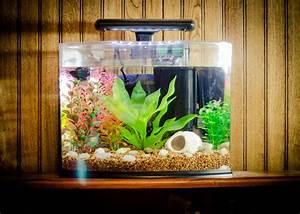 Betta Fish Aquarium Ideas Aquarium Design Ideas