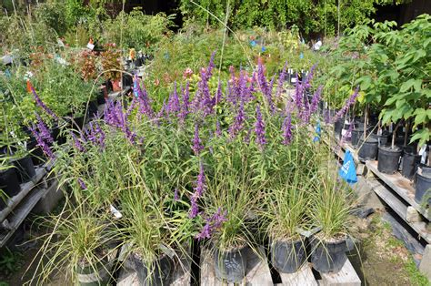 inside ucr fall plant sale set for oct 20 and 21