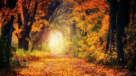 Download wallpaper 1600x900 autumn, park, foliage, trees ...