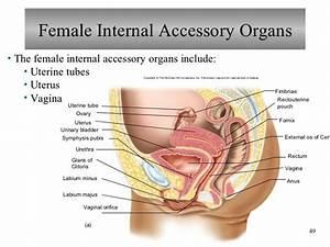 Female Reproductive System Anatomy Diagram