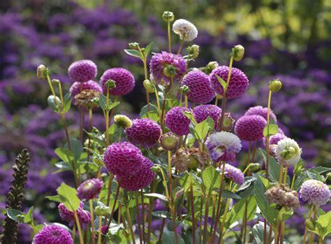 Garten Pflanzen September by Herbstbl 252 Lassen Den September Leuchten Garten News