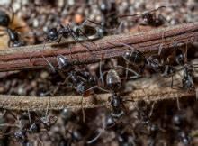Ameisen Im Blumenbeet : insekten garten ~ Whattoseeinmadrid.com Haus und Dekorationen
