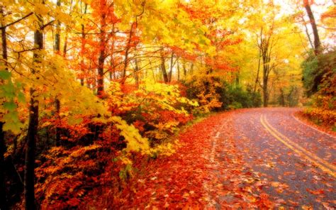 Animated Autumn Wallpaper - free animated fall backgrounds