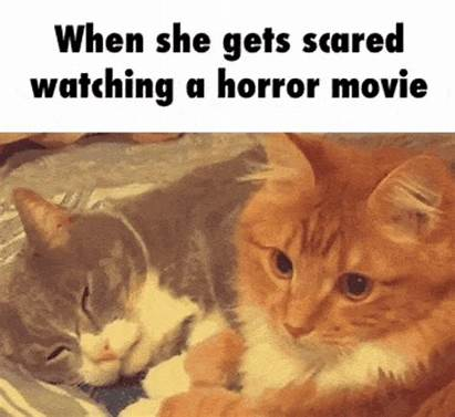 Funny Memes Gifs Weekend Tickle Fun Cat