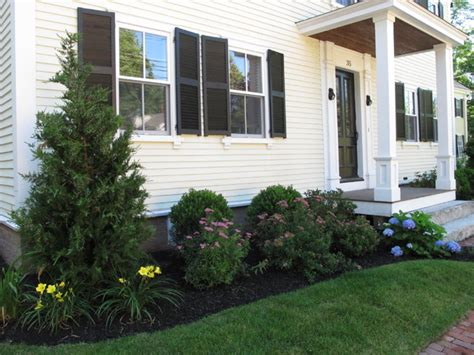 trees to plant to house foundation front foundation planting traditional landscape boston by nilsen landscape design llc
