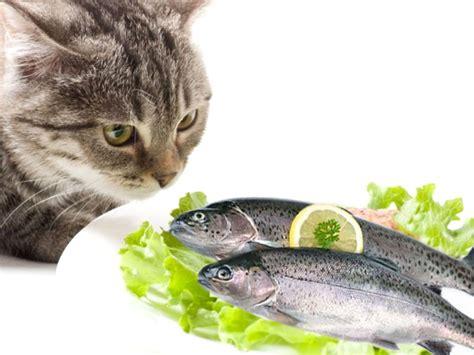 gatti alimentazione il pesce gatti alimentazione