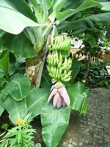 Fruit  U2013 Bananen