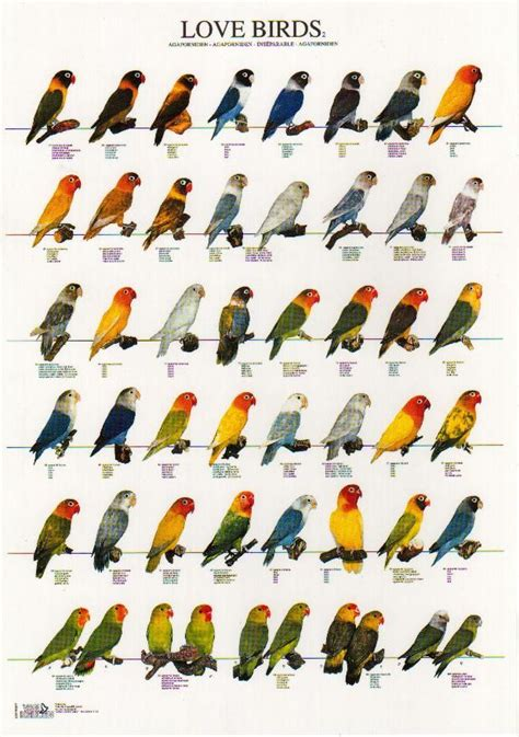 love bird color mutationsreal human heartcountry cats