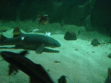 aquarium d ottrott les naades parc aquarium les na 239 ades 224 ottrott 67530 t 233 l 233 phone horaires et avis