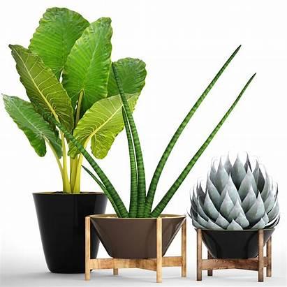 Tropical Plants Plant Models Pot Cgtrader 3dhunt