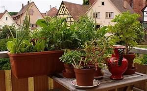 Gemüse Auf Dem Balkon : selbstversorgung auf dem balkon ~ Lizthompson.info Haus und Dekorationen