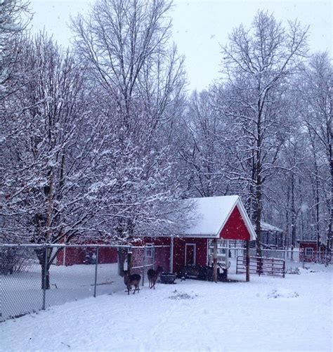 best christmas tree farm ri hensler nursery inc indiana s best tree farm and wholesale nursery