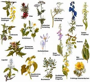 Welche Pflanzen Sind Für Hunde Giftig : giftpflanzen ~ Watch28wear.com Haus und Dekorationen