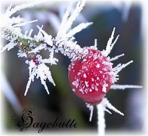 Blumen Im Winter : bluemli garten winter blumen im schnee mit bildern ~ Eleganceandgraceweddings.com Haus und Dekorationen