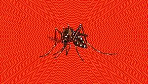 Games Event Moved Over Zika Virus Fears   Kotaku Australia