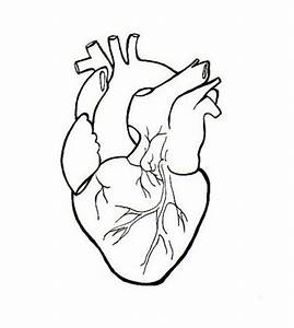 Human Heart Embroidery Anatomical Line Art Simple Embroidery