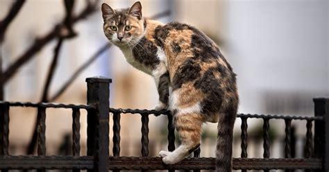 cats feral cat dangerous cattime