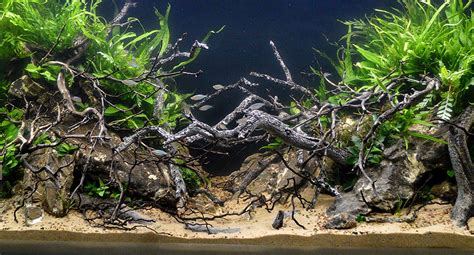 How To Aquascape A Planted Tank by Aquascaping Live 2017 Large Planted Tanks