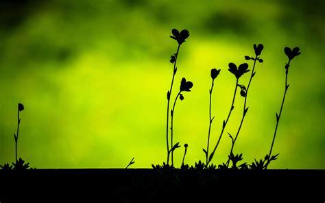 plant silhouettes hd desktop wallpapers  hd