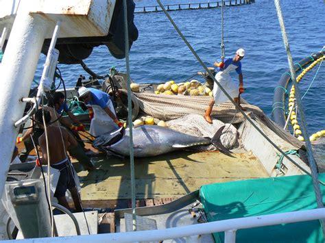 Tuna Boat Cost by Bluefin Tuna Back In The Spotlight Fish Navy Films