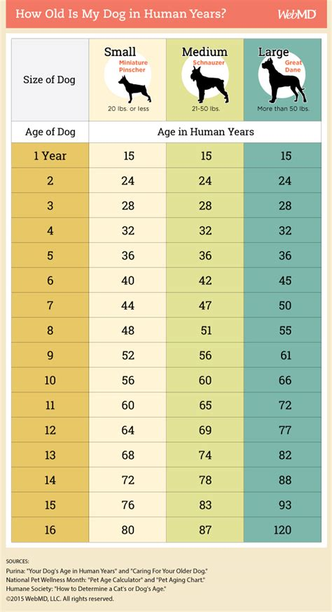 dog age chart   convert  dogs age  human years