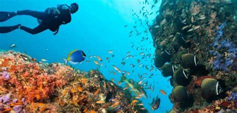 Best Dive Spots In The Caribbean by Best Scuba Snorkeling In Caribbean Spots Latitude21resorts