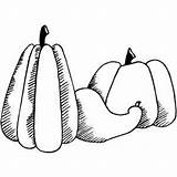 Gourd Coloring Pumpkin Halloween Sheet Sheets Koala Bear Freecoloringsheets sketch template