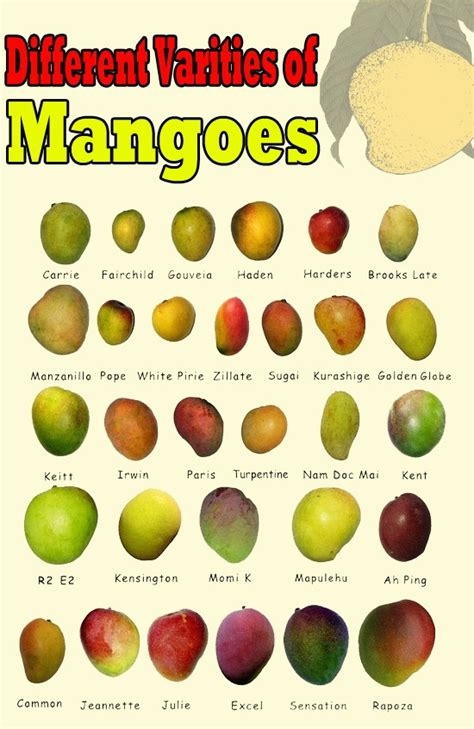variety names different varities of mangoes food quot sensible eating quot pinterest gardens and food